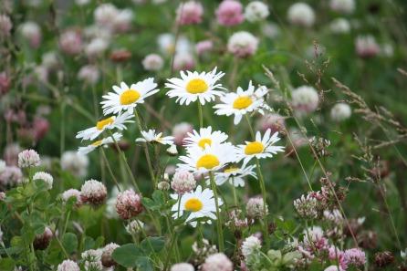 summer-meadow-2554092_1280