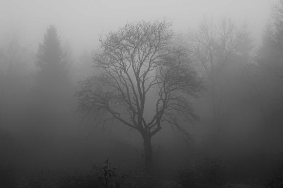 tree-1031814_1280