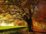 tree-779827_1280