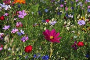 wildflowers-3571119_1280